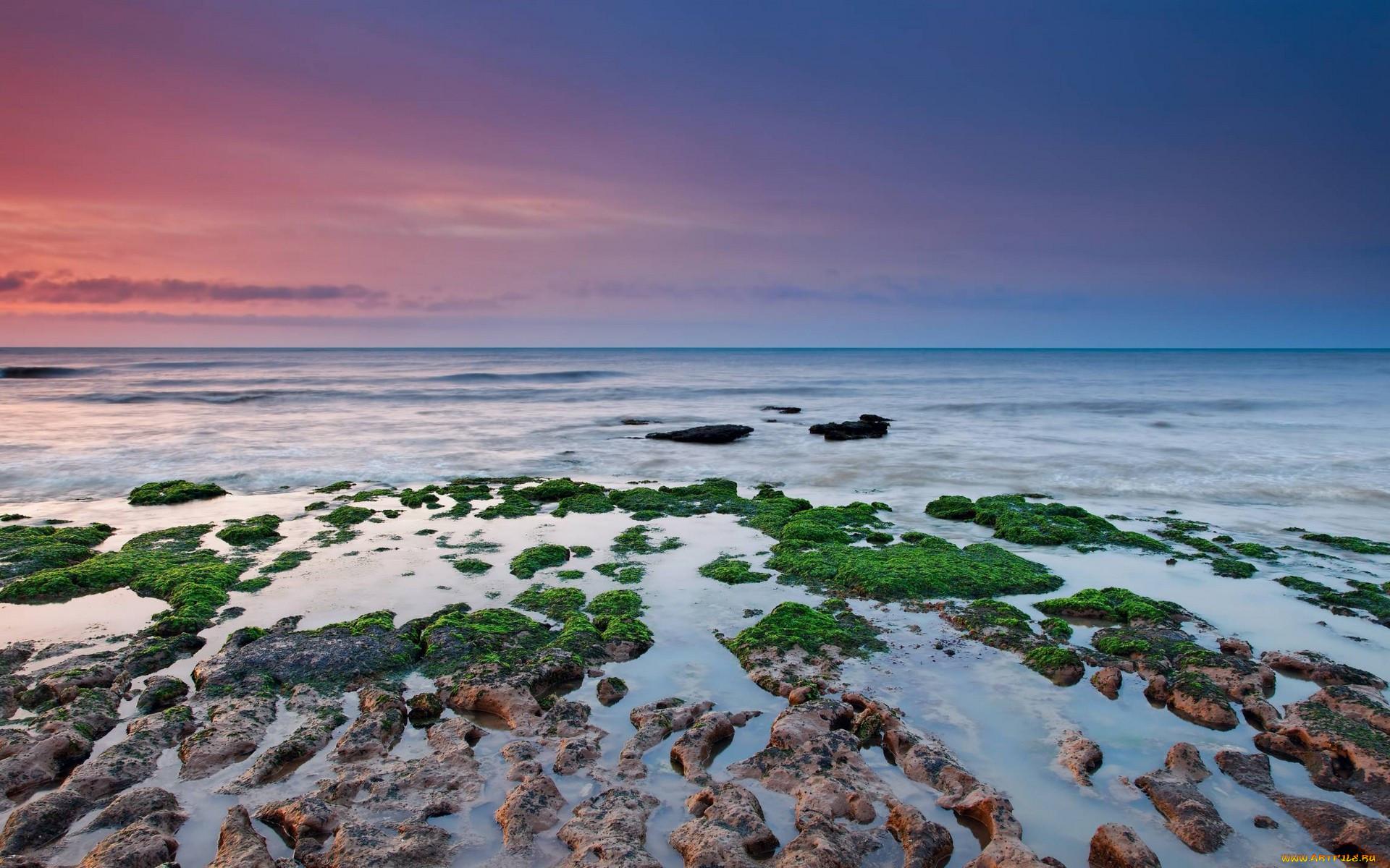 природа, побережье, море, камни, водоросли, берег, закат, небо